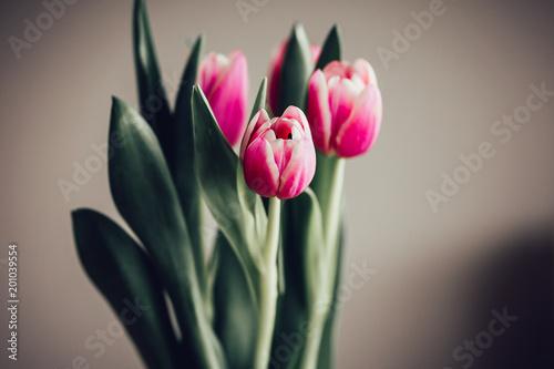 Plakat Prosty bukiet tulipany przeciw neutralnemu tłu