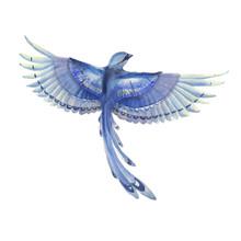 Blue Jay Bird Flying. Watercol...