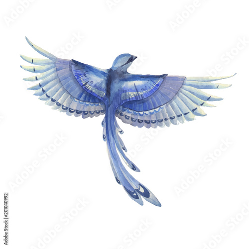 Blue Jay Bird Flying Watercolor Hand Drawn Illustration
