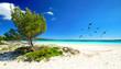 Pinien, weißer Sand und blaues Meer