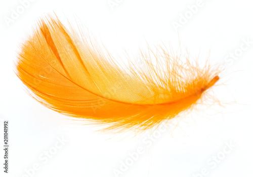 Fototapeta Piękne pomarańcze piórko na białym tle ścienna