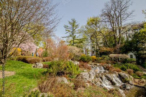 Der Frühlig im Setagaya Park, Wien, Österreich Poster