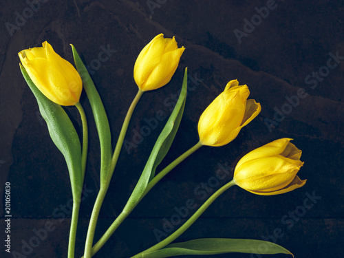 Foto op Plexiglas Tulp Yellow tulips on dark background