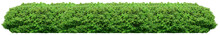 Fresh Green Bush Isolated On W...