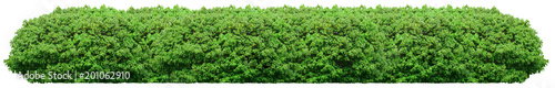 Foto Fresh green bush isolated on white background
