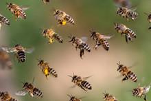 Fliegender Schwarm Bienen Mit ...