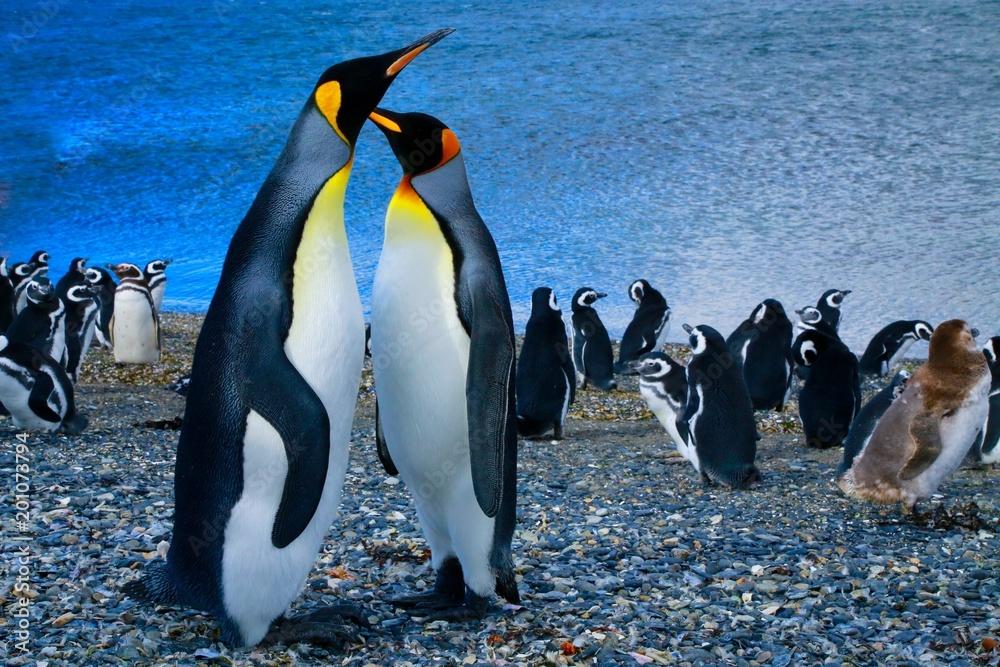 マゼランペンギン、パタゴニア地方、アルゼンチン