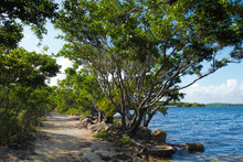 View Of A Trail In Biscayne National Park, Florida With Buttonwood Trees And The Ocean On Either Side. This National Park Is The Largest Underwater Park In The USA,
