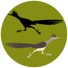 Roadrunner Bird Running  Vector Illustration Flat Style Black Silhouette