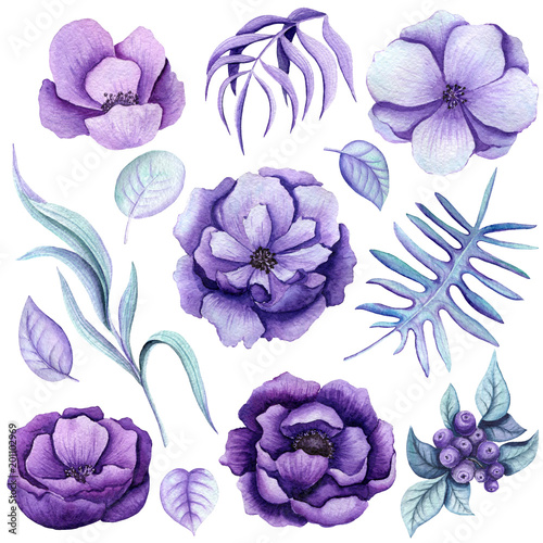 zestaw-botaniczny-akwarela-fioletowe-kwiaty