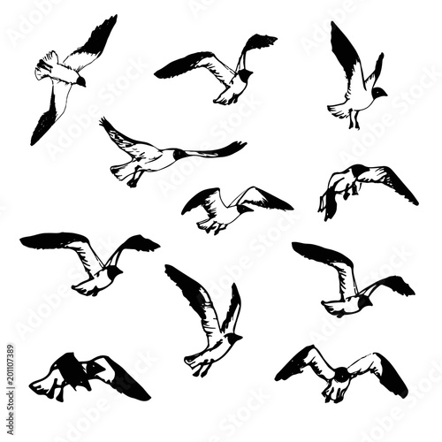 Hand Drawn Flying Seagulls Black And White Illustration Sketch