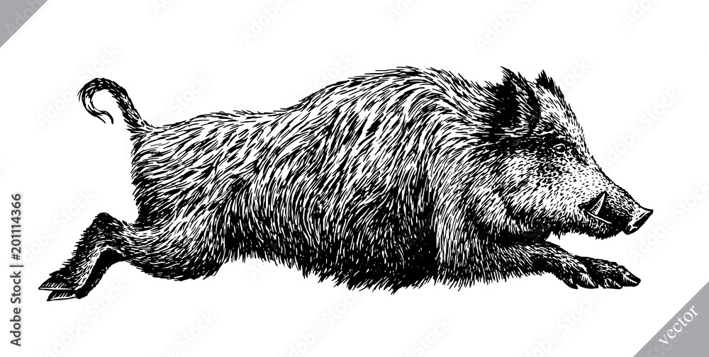 Fototapeta black and white engrave isolated pig vector illustration