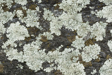 Texture: Brick Made Of Granite...