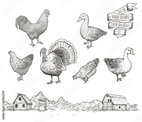 Obraz na płótnie Collection of farm poultry.