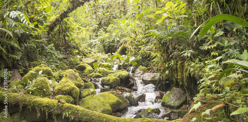 Idyllic clearwater stream flowing through montane rainforest at 1.900m elevation in the Cordillera del Condor, a site of high biodiversity and endemism in southern Ecuador