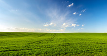 Spring Landscape Panorama,gree...