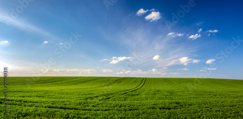 Sauvage spring landscape panorama,green wheat field