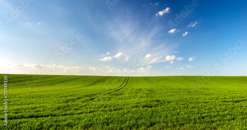 Poster Village spring landscape panorama,green wheat field