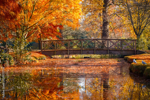 Ingelijste posters Herfst Wooden bridge in bushy park with autumn scene
