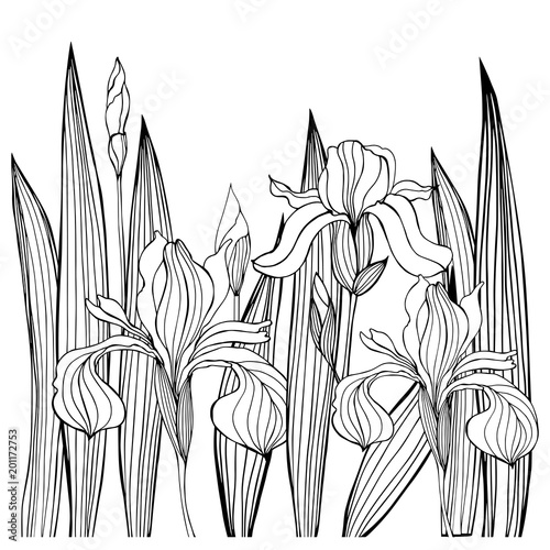 Fotobehang Bloemen zwart wit Hand-drawn iris flowers.Vector sketch illustration