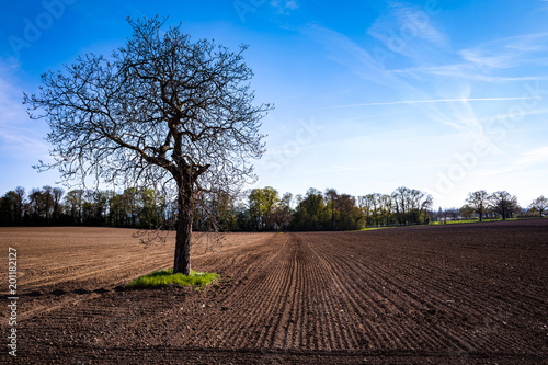 Papiers peints Cappuccino Isolated tree in a field at sunset