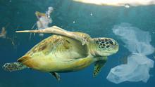 Plastic Pollution In Ocean Env...