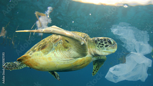 Foto op Aluminium Schildpad Plastic pollution in ocean environmental problem. Sea Turtle swims through discarded plastic rubbish which it can mistake for jellyfish food