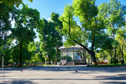 Fotografia city park in summer, bright sunlit, green trees and shadows