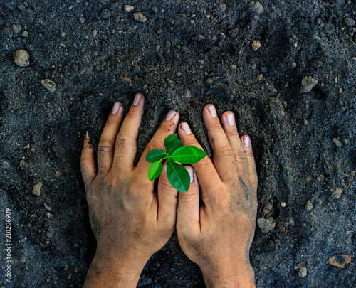 Valokuva  hands holding young plant. Ecology concept