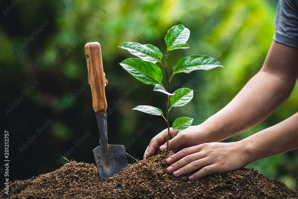 Grow passion fruit,Plant a tree in nature