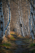Jesup Path In Acadia Naitonal ...