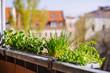 canvas print picture - Blumenkasten mit Basilikum, Tomate, Schnittlauch und Pfefferminze