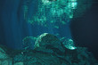 Unterwasserwelt im Cenote Tajma-Há, Yucatán