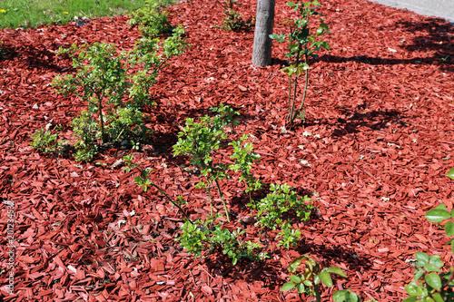 Fotografia, Obraz  Garden with red bark mulch