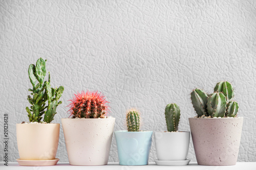 Papiers peints Cactus Beautiful cactuses in pots on table against color background