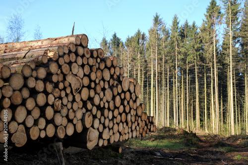 Foto auf Leinwand Brennholz-textur Holzstapel im Wald