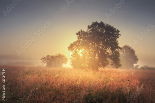 Foto auf Leinwand Dunkelbraun Autumn landscape of large tree on gold meadow in the evening. Sunrise through branches of trees. Scenery nature