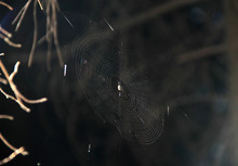 Spider Web In Contrast With Da...