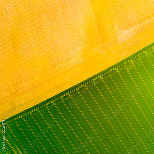 Poster Oranje Aerial view to green and brown fields with tractor tracks. Agricultural landscape from above.