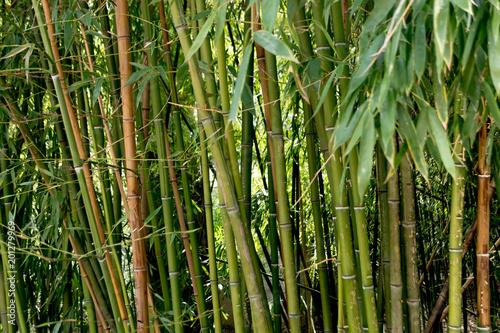 In de dag Bamboo Bamboo