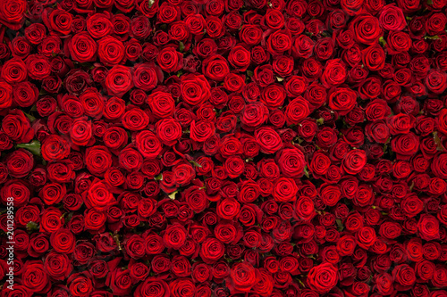 Foto op Canvas Bloemen Red roses texture and background