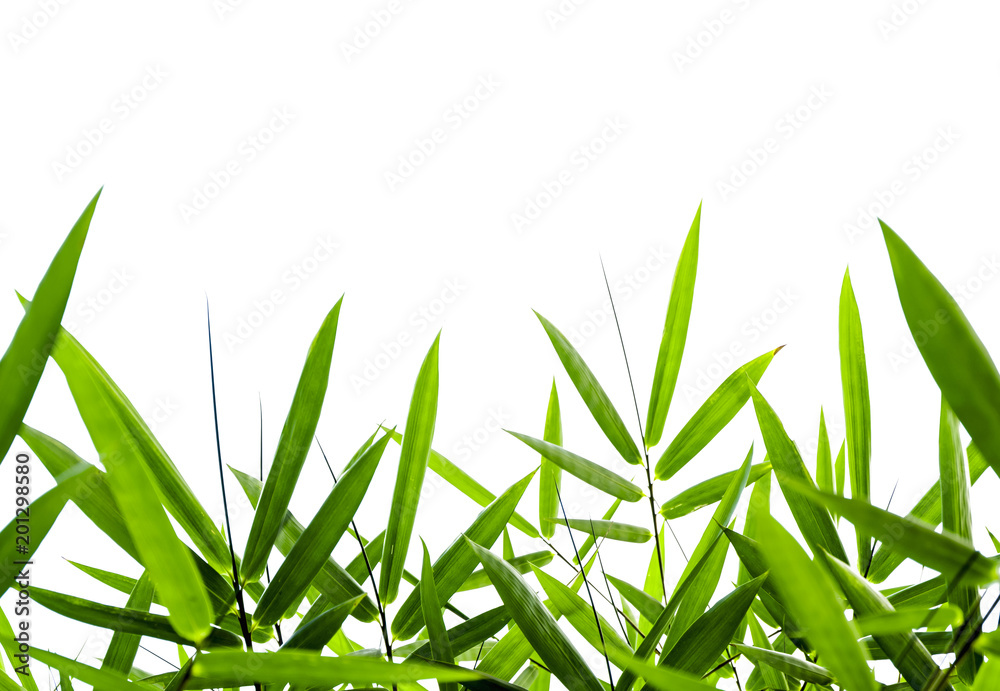 Bamboo leaves Isolated on a white background,With clipping path