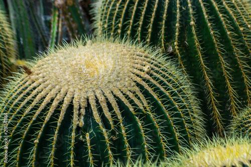 Tuinposter Cactus Cacti