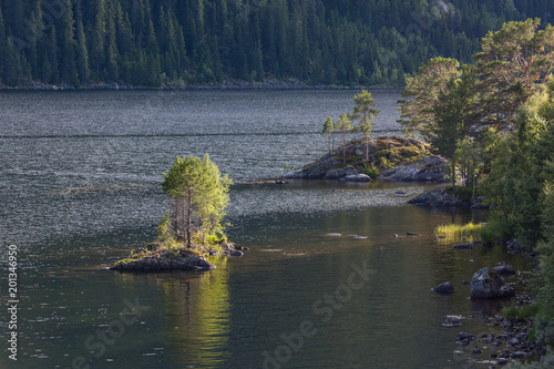 Staande foto Nachtblauw Beautiful evening view of trees on stones at the bank of Roldalsvatnet lake in the municipality of Odda, Norway