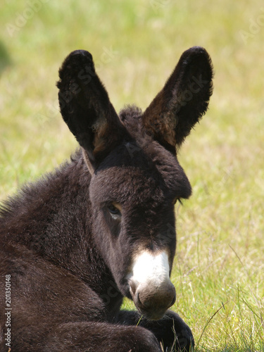 Staande foto Ezel Donkey Headshot