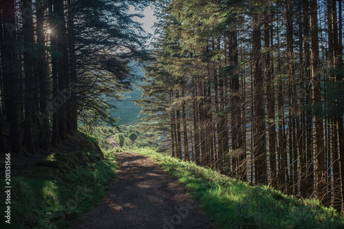 Wall Murals Forest Sunshine illuminating trees in a forest path.