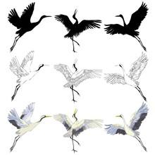Wild Birds In Flight. Animals ...