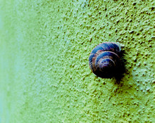 Snail On A Bumpy Colorfull Wal...