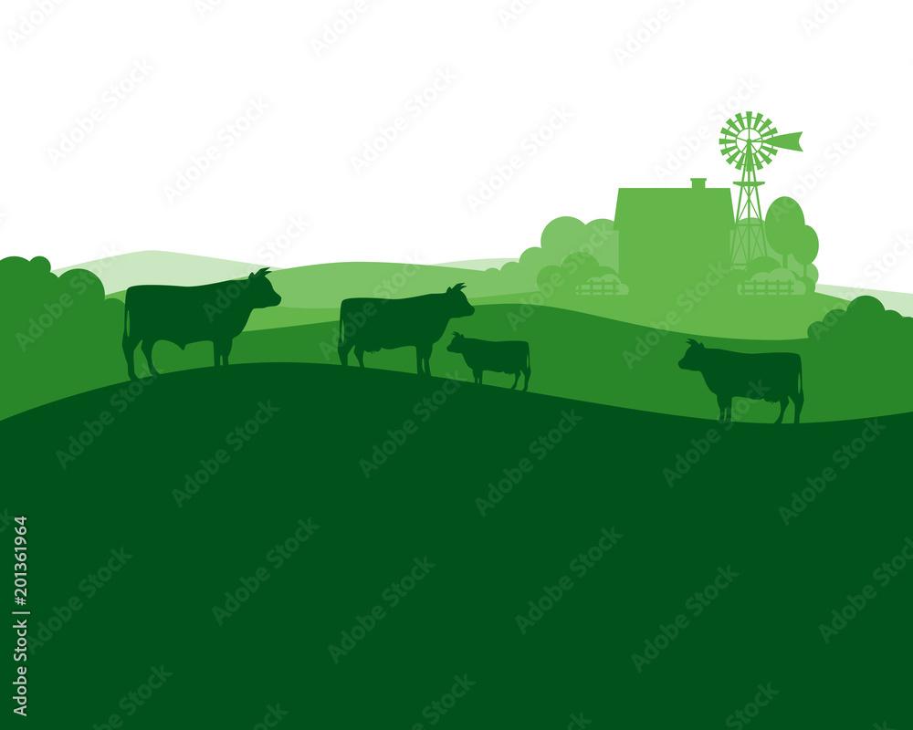 Fototapeta Rural landscape with milk farm and herd cows.