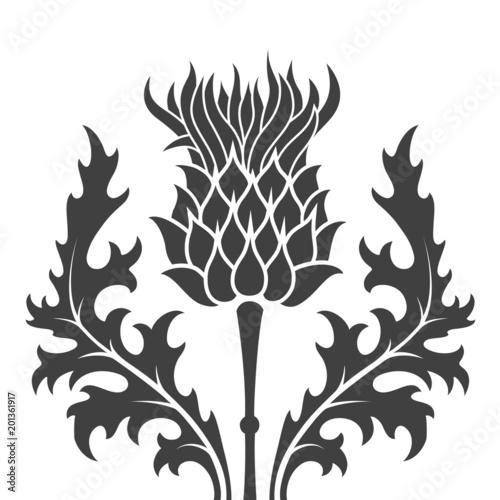 silhouette of a thistle flower Fototapeta
